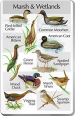 marsh and wetlands song card